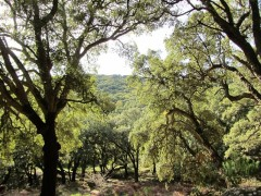 8.El Bosque