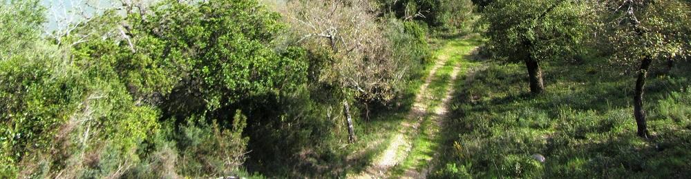 Camino 22