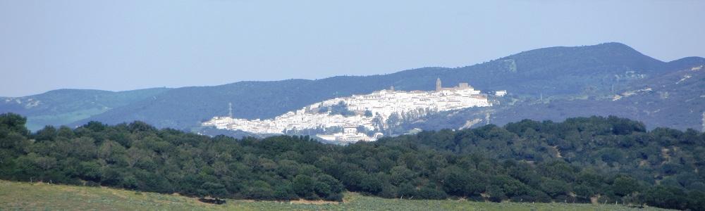 Alcalá 11