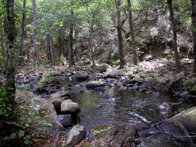 Masa-forestal-Andalucia_EDIIMA20150627_0017_5