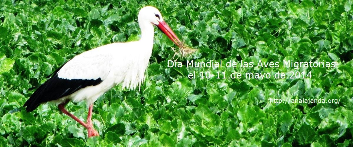 Día Mundial de las Aves Migratorias 2014
