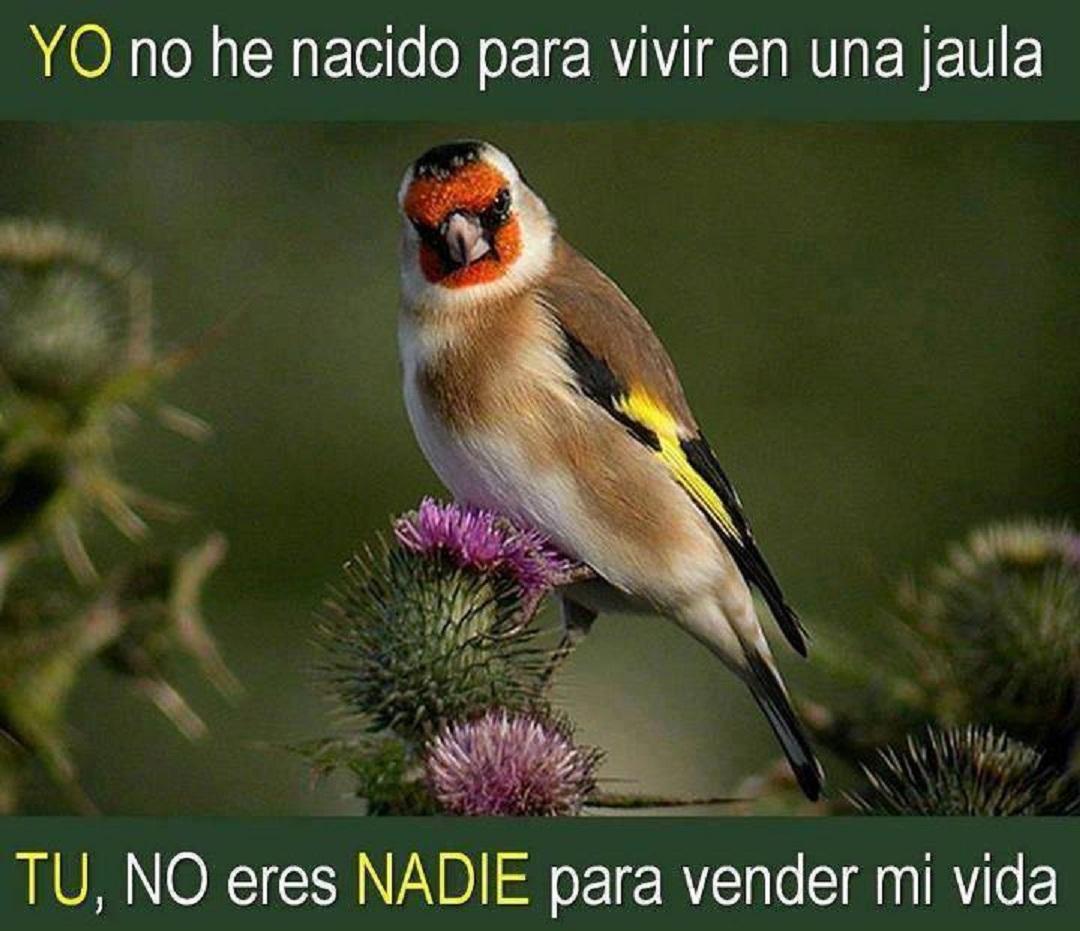 Foto Ornitológica 01