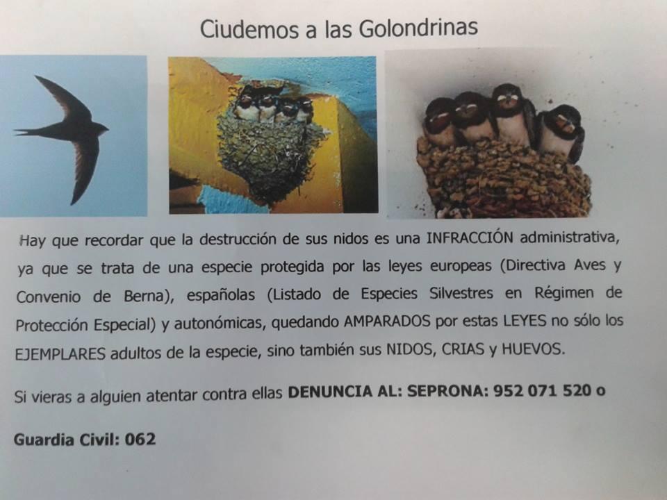 Foto Ornitológica 03