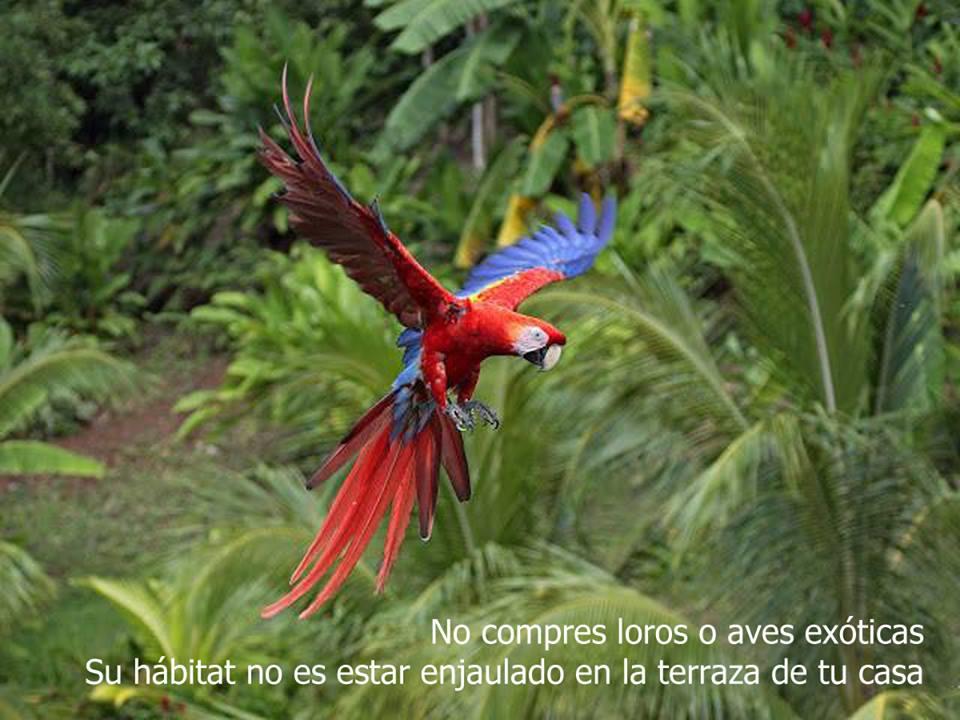 Foto Ornitológica 04