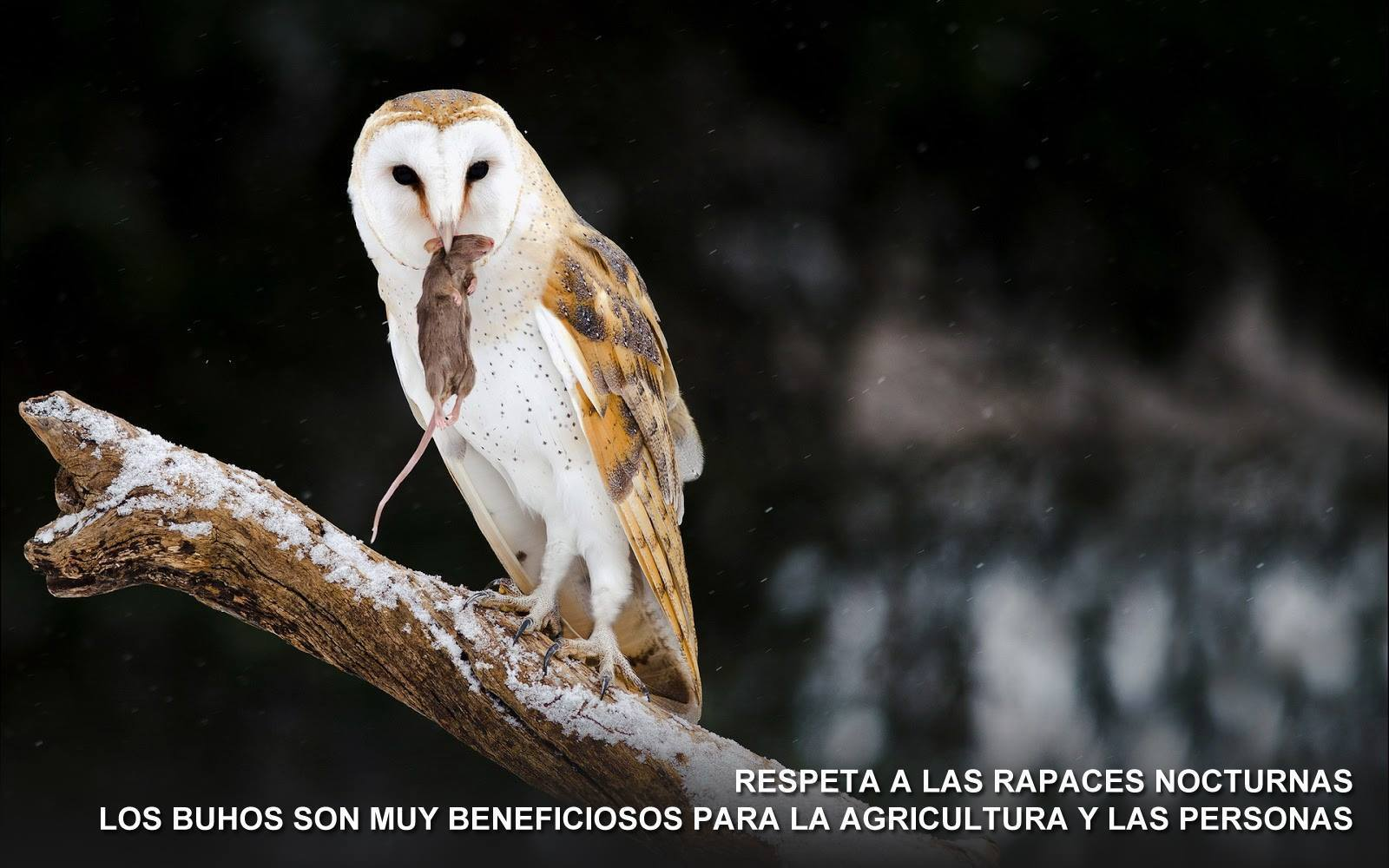 Foto Ornitológica 05