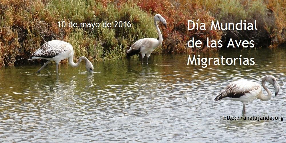 Día Mundial de las Aves Migratorias 2016 - copia